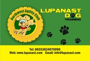 Lupanast Dog Training /North West Agility Centre